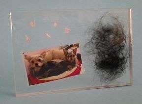Ein Foto mit Hundefell und Zahnen konserviert in Kunstahrzblock als Andenken